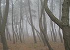 솔모래숲길